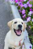 Psi odprowadzenie w parku Fotografia Royalty Free