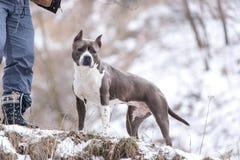 Psi odprowadzenie w parku w zimie Obrazy Royalty Free