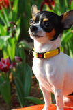 psi ogrodowy szczęśliwy Obrazy Stock