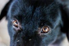 Psi oko Zdjęcie Royalty Free