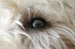 psi oko s zdjęcie royalty free