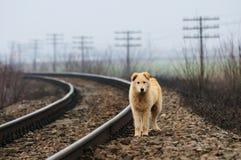 psi osamotniony zdjęcia stock