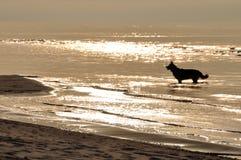 psi osamotniony Zdjęcia Royalty Free