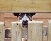 psi osamotniony Obrazy Stock