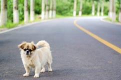 psi osamotniony czekanie Zdjęcia Stock