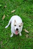 Psi patrzeć oddolny od ziemi w trawie, obraz royalty free