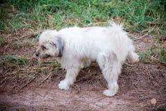 Psi peeing na trawie w parku zdjęcie stock