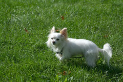 psi pet zdjęcia royalty free