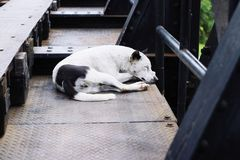 psi śpi obrazy royalty free