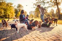 Psi piechur w ulicie z udzia?ami psy obraz stock