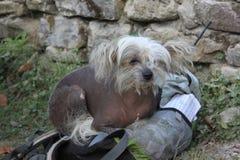 Psi plecak Fotografia Stock