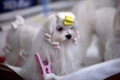 psi podołek Fotografia Royalty Free