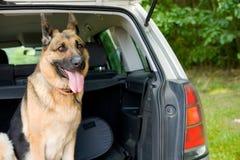 psi podróżowania Fotografia Royalty Free