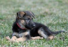 psi potomstwa fotografia stock