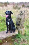 Psi pozować z sową Zdjęcia Royalty Free
