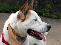 psi profil obraz stock