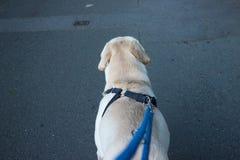 Psi prowadzący sposób Zdjęcia Stock