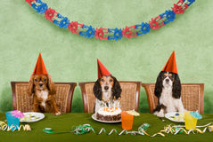 psi przyjęcie Obraz Royalty Free