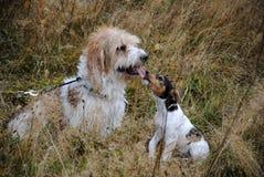 psi przyjaciele Fotografia Royalty Free