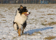 psi radosny Obraz Stock