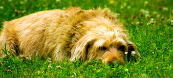 Psi relaksować Zdjęcie Stock