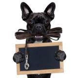 Psi rzemienny smycz fotografia royalty free