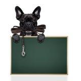 Psi rzemienny smycz zdjęcie stock