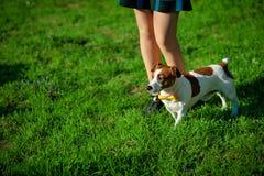 Psi ` s łapy cieki obok właściciela -- chodzący wpólnie instagram tonującego Zdjęcia Royalty Free