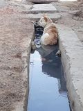 Psi ` s letni dni Fotografia Royalty Free