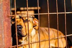 Psi schronienie anielski patrzeć - nadzieja - fotografia royalty free