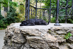 Psi sen Zdjęcie Stock