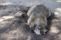 Psi sen na piasku obraz stock