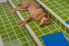 psi sen w outside dom Zdjęcia Royalty Free