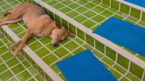 psi sen w outside dom Obrazy Royalty Free