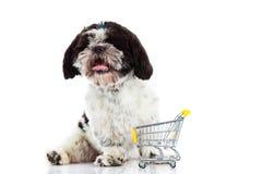 Psi Shih tzu z zakupy trolly odizolowywającym na białym tło psie Obrazy Stock