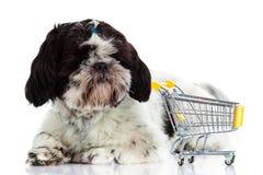 Psi Shihtzu z zakupy trolly odizolowywającym na białym tła zwierzęciu domowym Obrazy Royalty Free