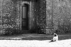 Psi siedzący samotny Obraz Royalty Free