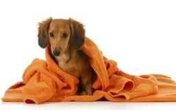 Psi skąpanie Zdjęcia Royalty Free