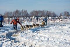 Psi sledding przy festiwal zimy zabawą w Uglich, 10 02 2018 wewnątrz Fotografia Royalty Free
