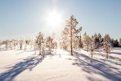 Psi sledding w Lapland Obraz Stock