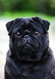 psi smutny Zdjęcie Stock