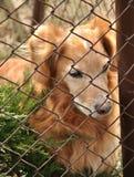 psi smutny obraz stock
