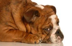 psi smutny fotografia stock
