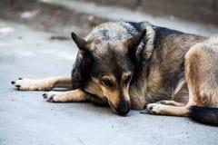 psi smutny bezpański Fotografia Royalty Free