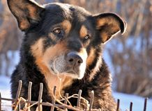 Psi smutny głodny Fotografia Stock