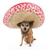 psi sombrero zdjęcie stock