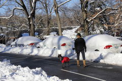 Psi spaceru central park Obrazy Royalty Free