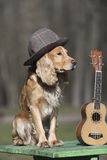 Psi spaniel złoty kolor z ukulele spanielem złoty kolor z ukulele Fotografia Stock