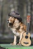 Psi spaniel złoty kolor z ukulele spanielem złoty kolor z ukulele Zdjęcia Royalty Free