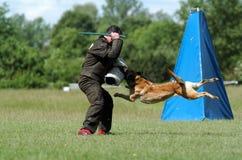 psi sportu Obraz Stock
